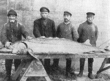 Rybacy i rybołówstwo u ujścia Świny