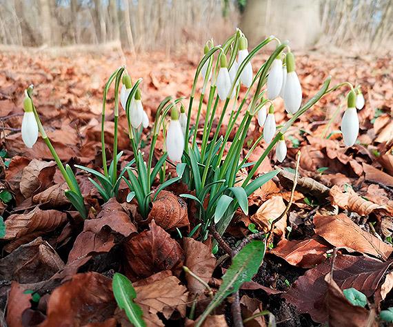 Wiosna skrada się małymi krokami