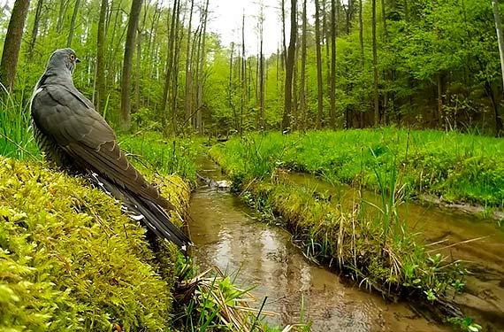 Wakacje na łonie natury. Jak obserwować świat przyrody, radzi przyrodnik Marcin Kostrzyński