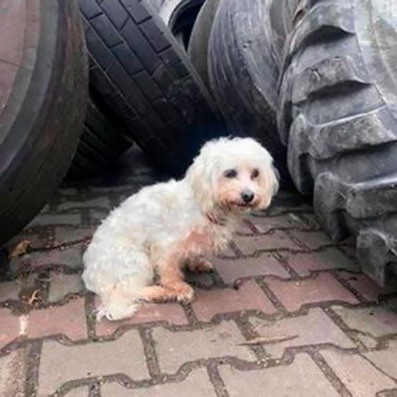 Zagubiony piesek czeka na swojego właściciela